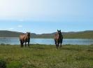 På østsiden av vannet er det godt fjellbeite for hestene. Foto: Evald Bjerkli