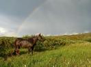 Fjelltur 22. til 26. august. Etter oppstigninga fra Reisadalen blir vi overraska av et kortvarig, men kraftig regnvær. Blesten tar all slags vær med knusende ro. Foto: Evald Bjerkli