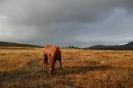 Solgløtt før regnet pøser ned. Reisa finner godt beite i den gresskledte Ruossavággi øst for Kjækan. Foto: Evald Bjerkli