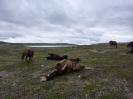 Maria Ellingsen har tatt 35 bilder fra tur i august; Saraelv, Saravann, Somasjärvi. Hesta liker å rulle seg!