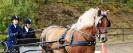 hester og aktiviteter 2012_11