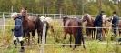 hester og aktiviteter 2012_13