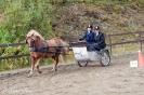 hester og aktiviteter 2012_14