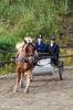 hester og aktiviteter 2012_4
