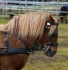 hester og aktiviteter 2012_6