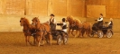 Hester og aktiviteter 2013