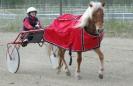 Lyngshestdagene 2006 på Nord-Norsk hestesenter